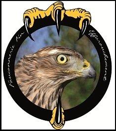 logo fauconnerie stage éfarouchement spectacle rapace aigle tossiat faucon revermont christophe rey